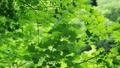 树木在风中摇曳 53845409