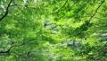 森林新鲜的绿树在风中摇曳 53845483