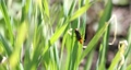 Black beatle or bug in green grass in summer 53906916