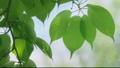 新緑の葉っぱ 54040830