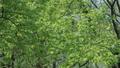 新緑の葉っぱ 54040836