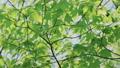 新緑の葉っぱ 54040837