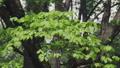 新緑の葉っぱ 54040838