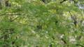 新緑の葉っぱ 54040839