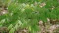 新緑の葉っぱ 54040840