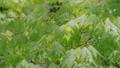 新緑の葉っぱ 54040841