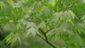 新緑の葉っぱ 54040842