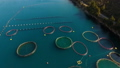 Aerial shoot of farm for growing shells, mussels and oysters 54050024
