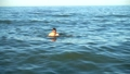 The man swims in the sea in the summer evening.  54078596