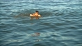 The man swims in the sea in the summer evening.  54078598
