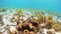 Anemonefish Pangorao 54108978