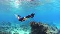 シュノーケリング 水中 サンゴの動画 54109961