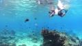 シュノーケリング 水中 サンゴの動画 54109963