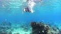 シュノーケリング 水中 サンゴの動画 54109964