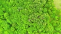 森林1 54116169