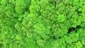森林3 54116175