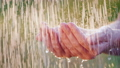 A man holds his hands in the pouring rain, drops of water fly apart. Cool and clean water concept 54119886