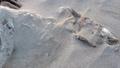Full sheep skeleton lying on the sandy beach of Portnoo, County Donegal - Ireland 54126159