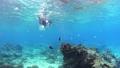 シュノーケリング 水中 海水魚の動画 54135697