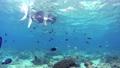 シュノーケリング 水中 サンゴの動画 54135699
