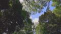 新緑の木と青空 54207054