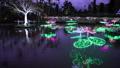 沖縄 冬の東南植物楽園 水上楽園の池 イルミネーション 54209403