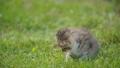 little kitty in the green grass 54275686