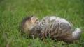little kitten sitting in the green grass 54276929