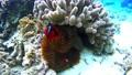 ภาพถ่ายใต้น้ำของดอกไม้ทะเลปลาปางเลา 54282838
