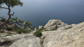 Seascape from Caraul-Oba mountain. Pine tree on rock. Sudak, Crimea. 54286966