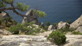 Seascape from Caraul-Oba mountain. Pine tree on rock. Sudak, Crimea. 54286967