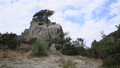 Landscape on Caraul-Oba mountain. Pine tree on rock. Sudak, Crimea. 54286970