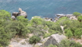Seascape from Caraul-Oba mountain. Juniper bushes on rock. Sudak, Crimea. 54286972