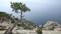 Seascape from Caraul-Oba mountain. Pine tree on rock. Sudak, Crimea. 54287077