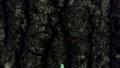 Pyramidal green fruitworm endlessly crawling 54287990