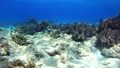 Tropical fish and coral reef Underwater shot Pangolao 54345125