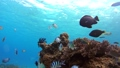 Tropical fish and coral reef Underwater shot Pangolao 54345149