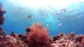 Tropical fish and coral reef Underwater shot Pangolao 54345160