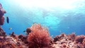Tropical fish and coral reef Underwater shot Pangolao 54345164