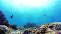 Tropical fish and coral reef Underwater shot Pangolao 54345504