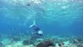 シュノーケリング 水中 サンゴの動画 54347120