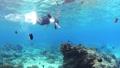 シュノーケリング 水中 サンゴの動画 54347134