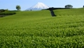 今宮からの春の風景-6088364 54351881