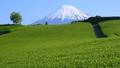 今宮からの春の風景-6088367 54351882