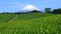 今宮からの春の風景-6088681 54351885