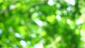 新緑・アウトフォーカス 54412926