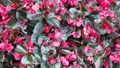 Beautiful Blooming Flowers swaying in the wind. Close Up. SLOW MOTION. Calm Cinematic Nature 54420549