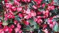 Beautiful Blooming Flowers swaying in the wind. Close Up. SLOW MOTION. Calm Cinematic Nature 54420557