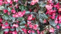 Beautiful Blooming Flowers swaying in the wind. Close Up. SLOW MOTION. Calm Cinematic Nature 54420561