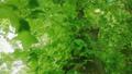 太陽の光が漏れる新緑の木 54454738